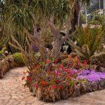 הגן האקזוטי של מונקו – Jardin Exotique de Monaco